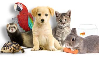 Affiche de l'Animal Expo Z014