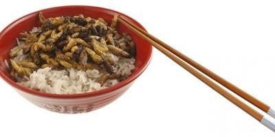 Bol de riz et d'insectes
